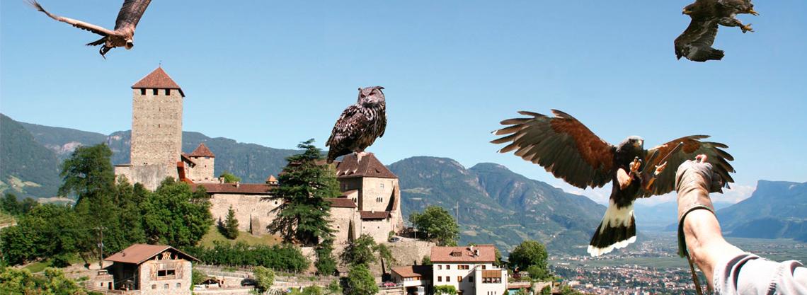 Gufyland: Greifvogelschau im Schloß Tirol