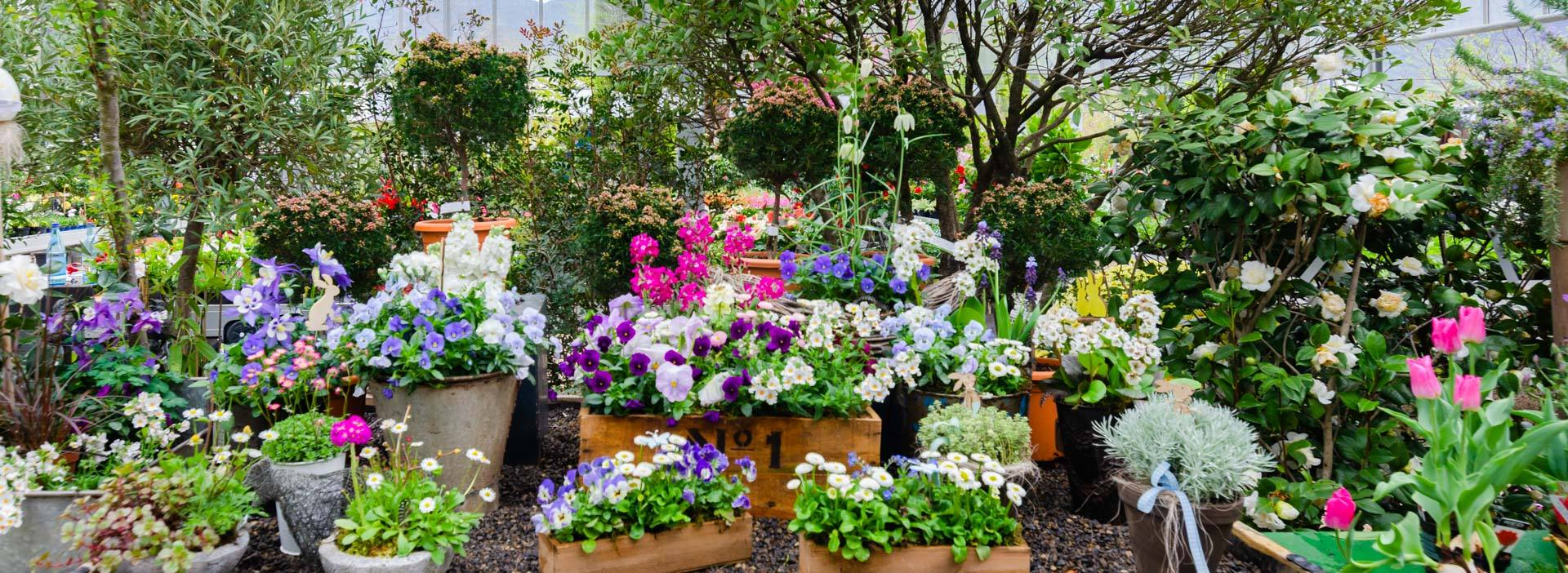 Giardineria Galanthus
